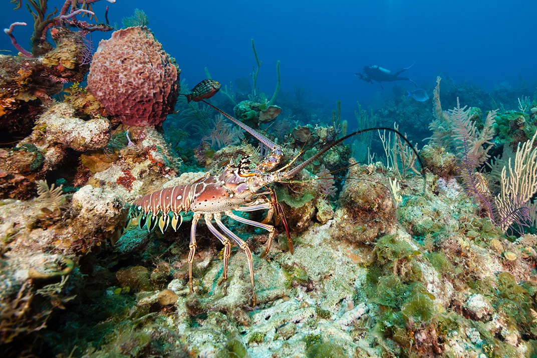 To Make Lobster Fisheries More Sustainable, Scientists Attempt to Decode Crustacean DNA
