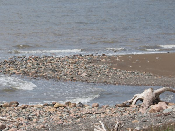 A skull on the beach at the Bay of Fundy thumbnail
