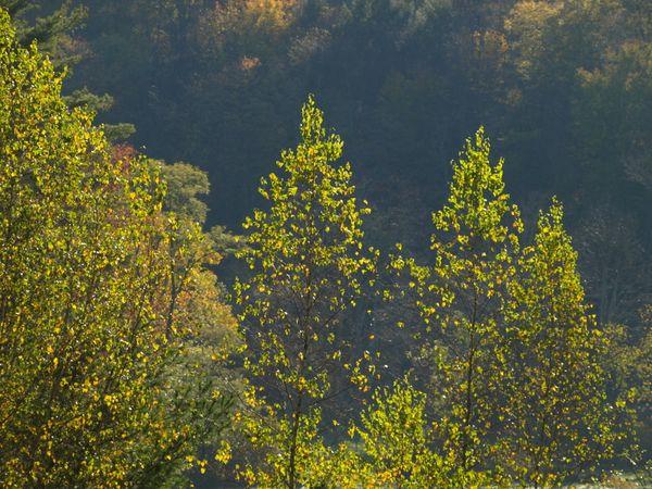 Autumn in Western NY thumbnail