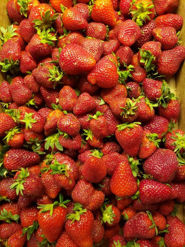Fresh picked strawberries thumbnail
