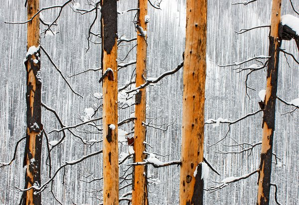 Forest fire remains, Kootenay National Park, Alberta, Rocky Mountains thumbnail