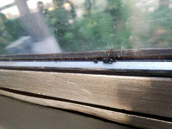 The trip by train thumbnail