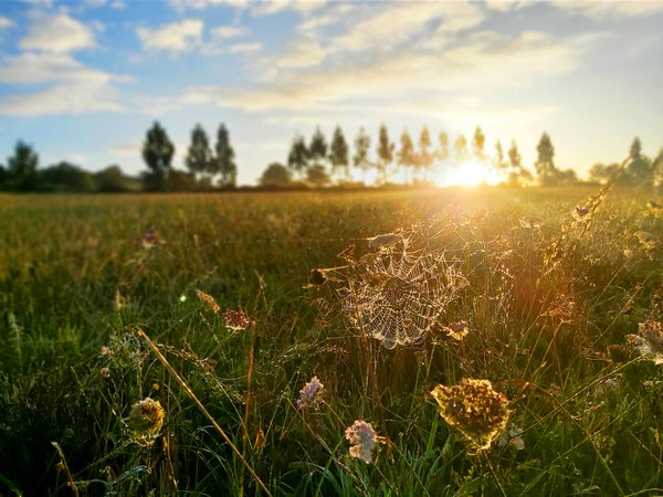 The sunrise behind a line of trees reflecting on a spider web and flowers in the fields of Galicia, Spain during a cycling trip on the Camino de Santiago de Compostela, Oct. 09, 2019.