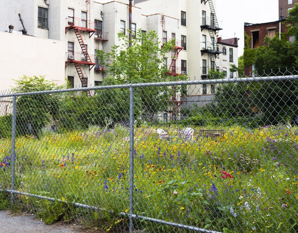 Community Garden in a Vacant Lot thumbnail