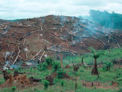 Deforestation in Liberia