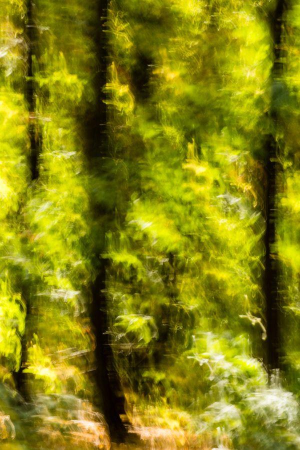 Forest Dream thumbnail
