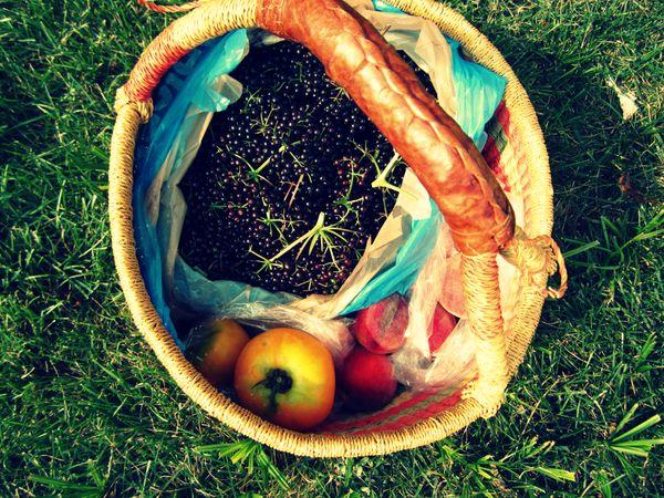 Peaches, Elderberries & Tomatoes - Oh My!  thumbnail