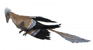 20110520083241800px-Microraptor_mmartyniuk-300x163.jpg