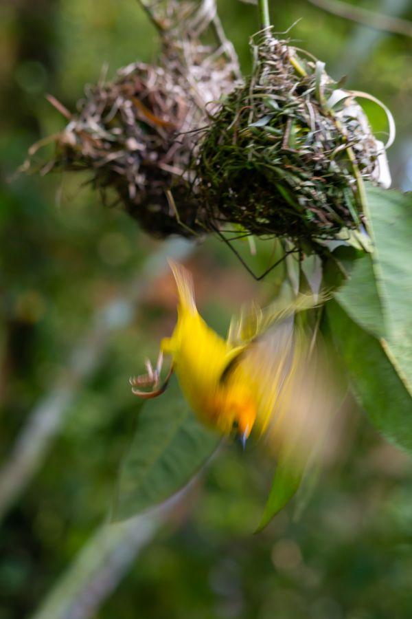 Bird-nest thumbnail