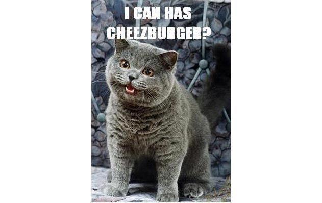 i can has cheezburger LOLCAT