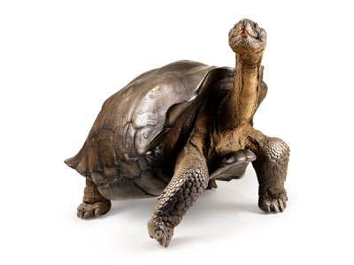 A Galápagos tortoise specimen from the California Academy of Sciences