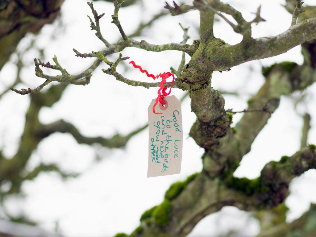 New York's Cideries Bring the Tradition of Wassailing to the Finger Lakes