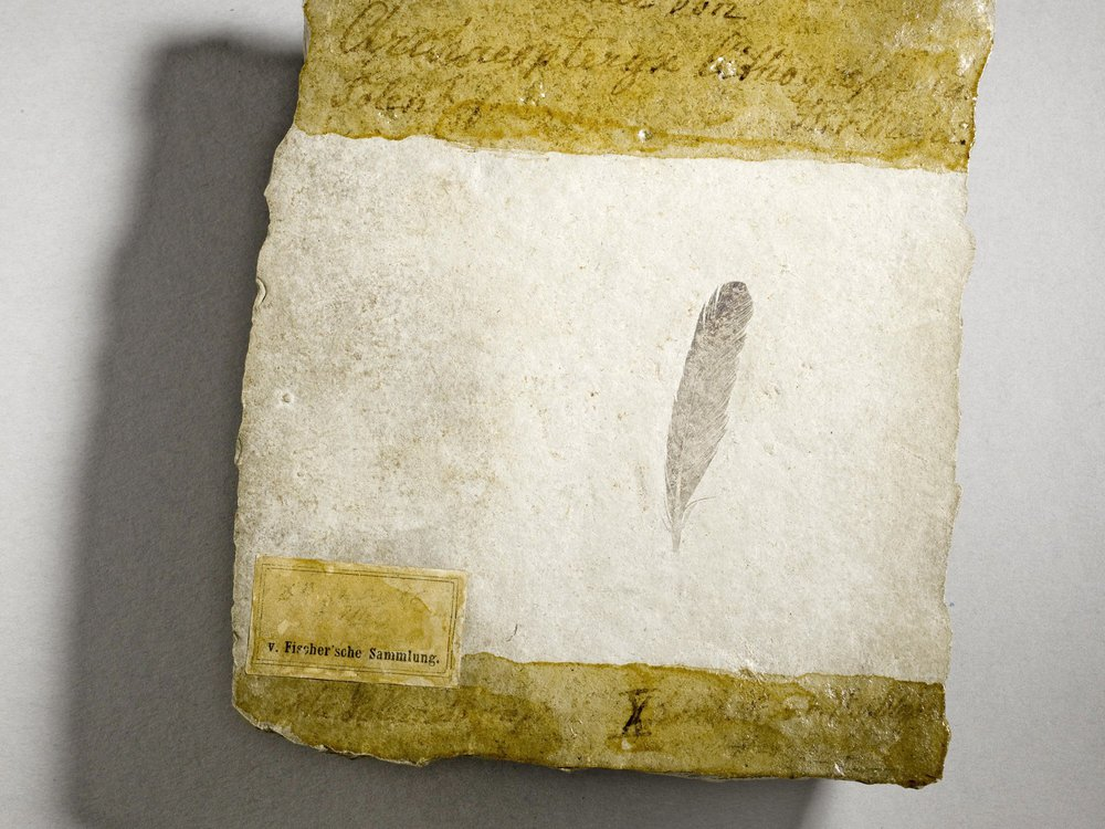 First fossil feather ever found