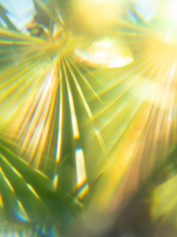Palm leaves (Turks and Caicos) thumbnail