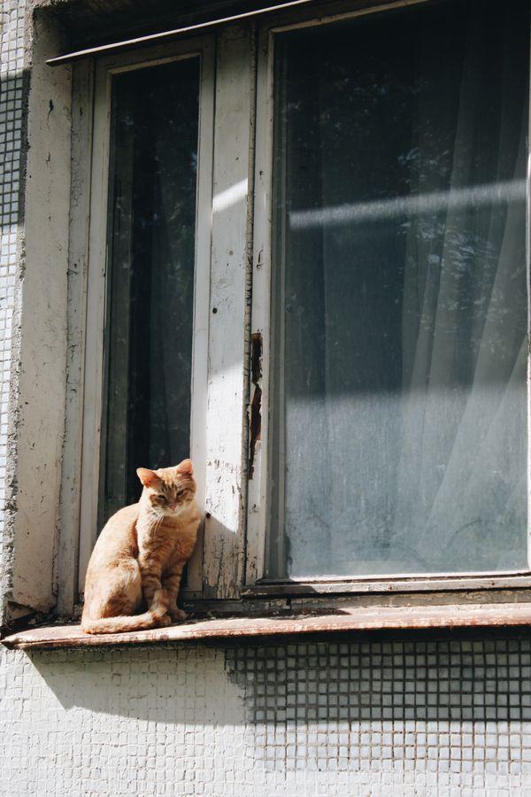 A sad cat thumbnail