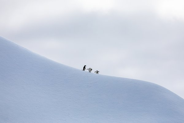 I was hoping to capture a penguin or group of penguins alone on a floating iceberg in Antarctica on my recent trip in February. As usual, nature has a way of adding some elements we were not expecting. The three penguins added a bit of humor to the photograph while posing in different silly ways. Nature is fabulously unpredictable.