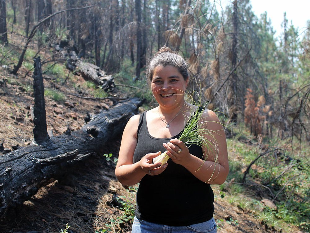 """Carolyn Smith collecting beargrass in Klamath National Forest, 2015. For beargrass to be supple enough for weavers to use in their baskets, it needs to be burned annually. Ideally, it is burned in an intentionally set cultural fire, where only the tops are burned, leaving the roots intact. Prescribed fires in the Klamath National Forest are few and far between, so weavers """"follow the smoke"""" and gather, when they can, after wildfires sweep through the landscape. (Photo courtesy of Carolyn Smith)"""