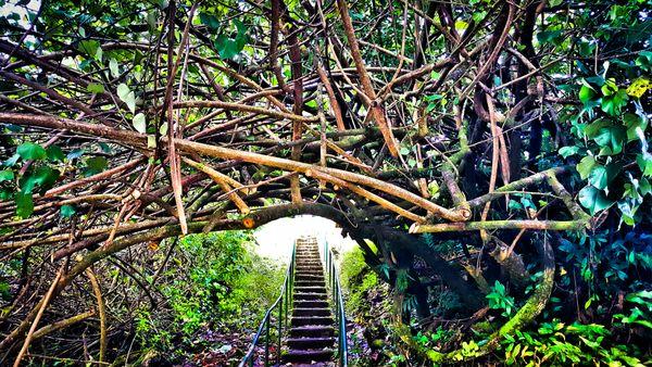 Overgrown Walkway thumbnail