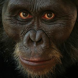 Sculpture of an ancient human ancestor