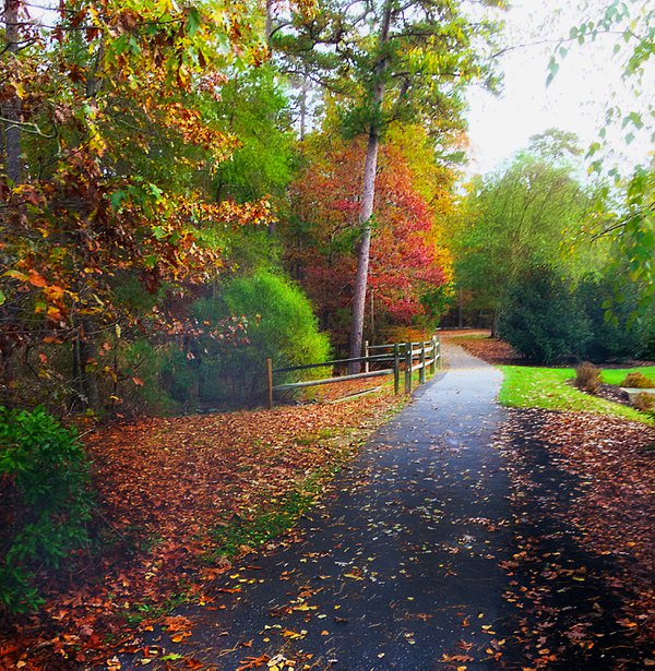 Autumn Stroll thumbnail