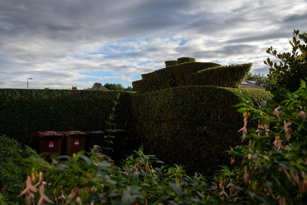 How Hedges Became the Unofficial Emblem of Great Britain