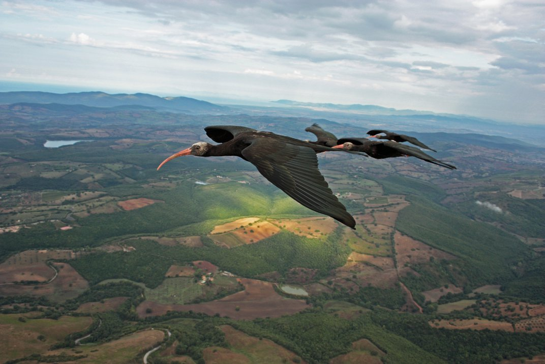 Scientists Solve Mystery of Birds' Flying V