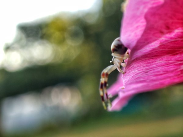 A little spider on his flower thumbnail