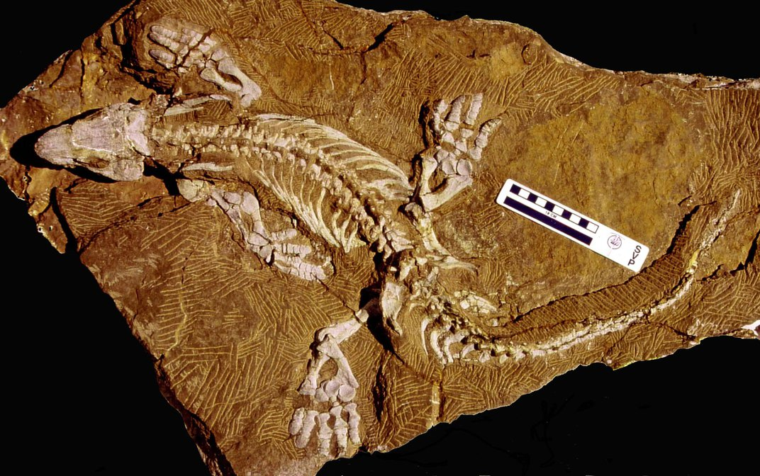 Scientists Used a Robot to Study How Prehistoric Lizards Walked