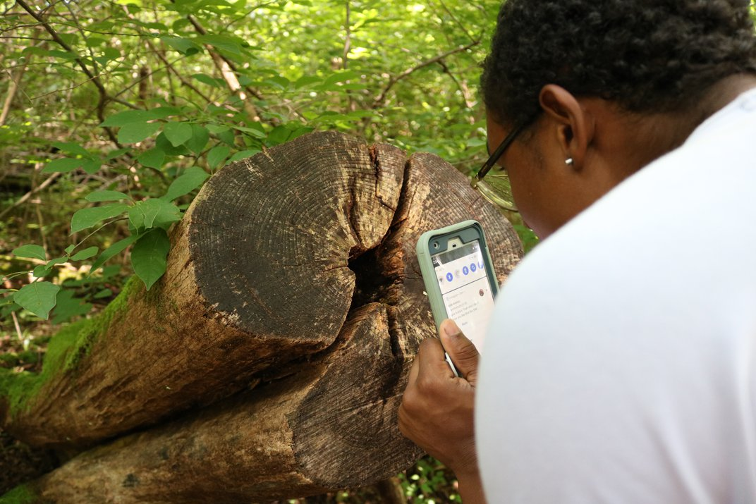 Person holds their cellphone close to a tree trunk