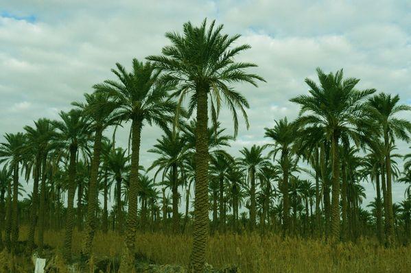 Palm Trees thumbnail