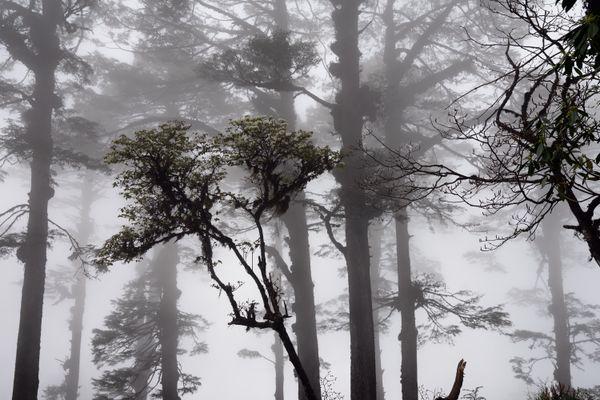 A foggy forest thumbnail