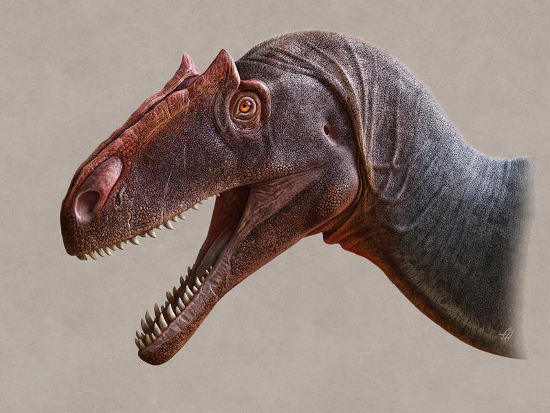 Allosaurus_jimmadseni-gray-credit-Andrey-Atuchin.jpg