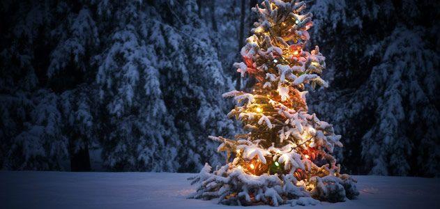 christmastree-631-2.jpg