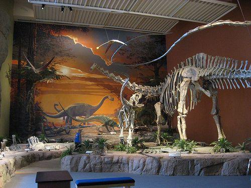 20110520083235Seismosaurus-Saurophaganax-New-Mexico.jpg