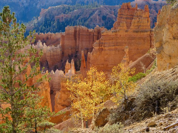 Fall Colors in Bryce thumbnail