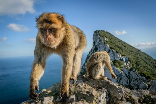 Macaques at the Top of the Rock thumbnail