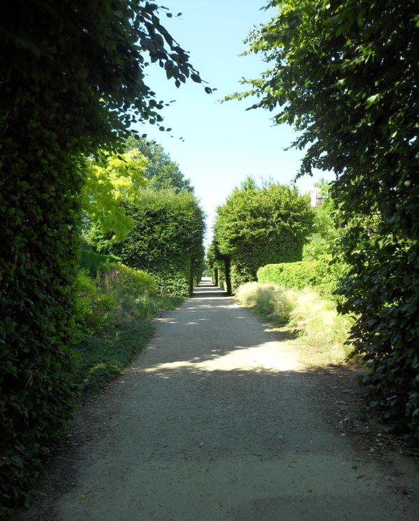 A path through green shrubs thumbnail