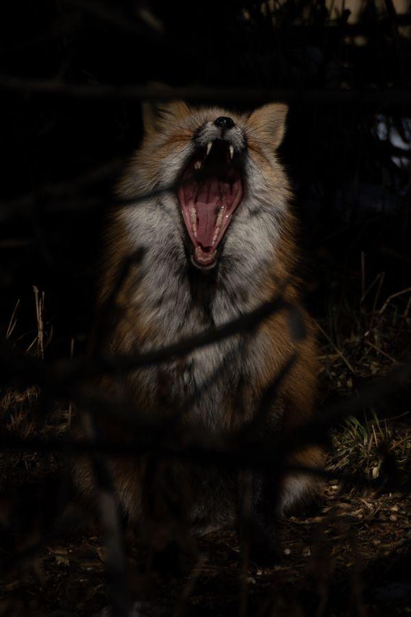 Wild Yawn thumbnail