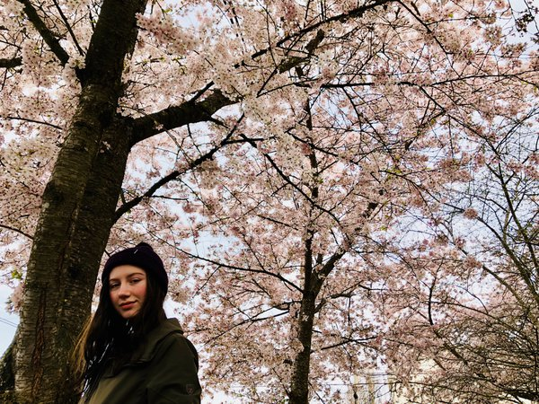 cherry cheeked girl with cherry blossoms thumbnail