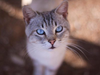 What do this cat's pupils say about what it had for dinner?