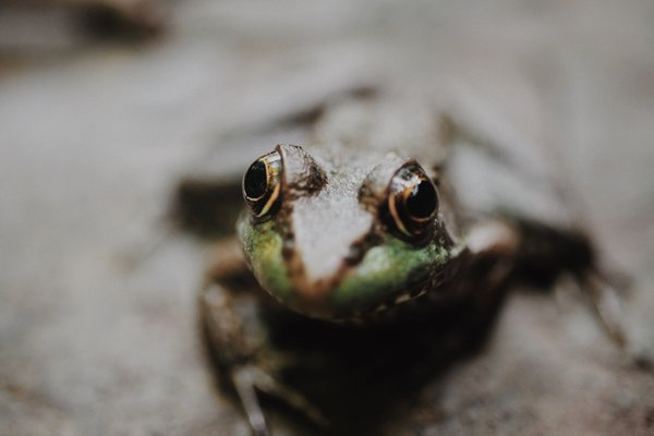 A frog while hiking at a state park. thumbnail