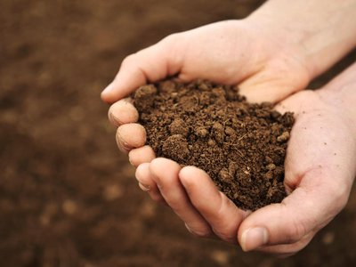 The microbes living in soil may be crucial for healthy plants. What's more, soil microbiomes are hyperlocal, varying immensely from place to nearby place.