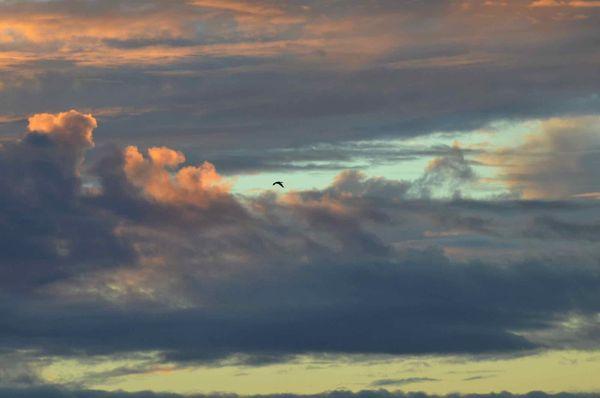 Sunset cormorant over Morro Bay thumbnail