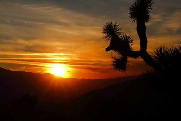 Joshua Tree Sunset thumbnail