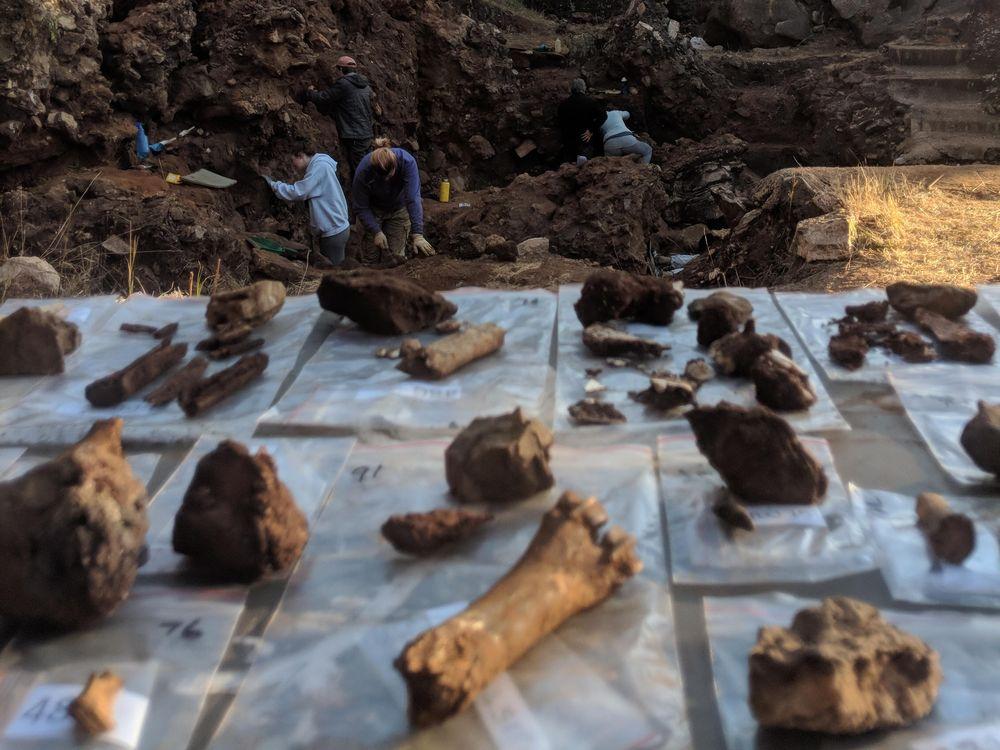 Drimolen excavations