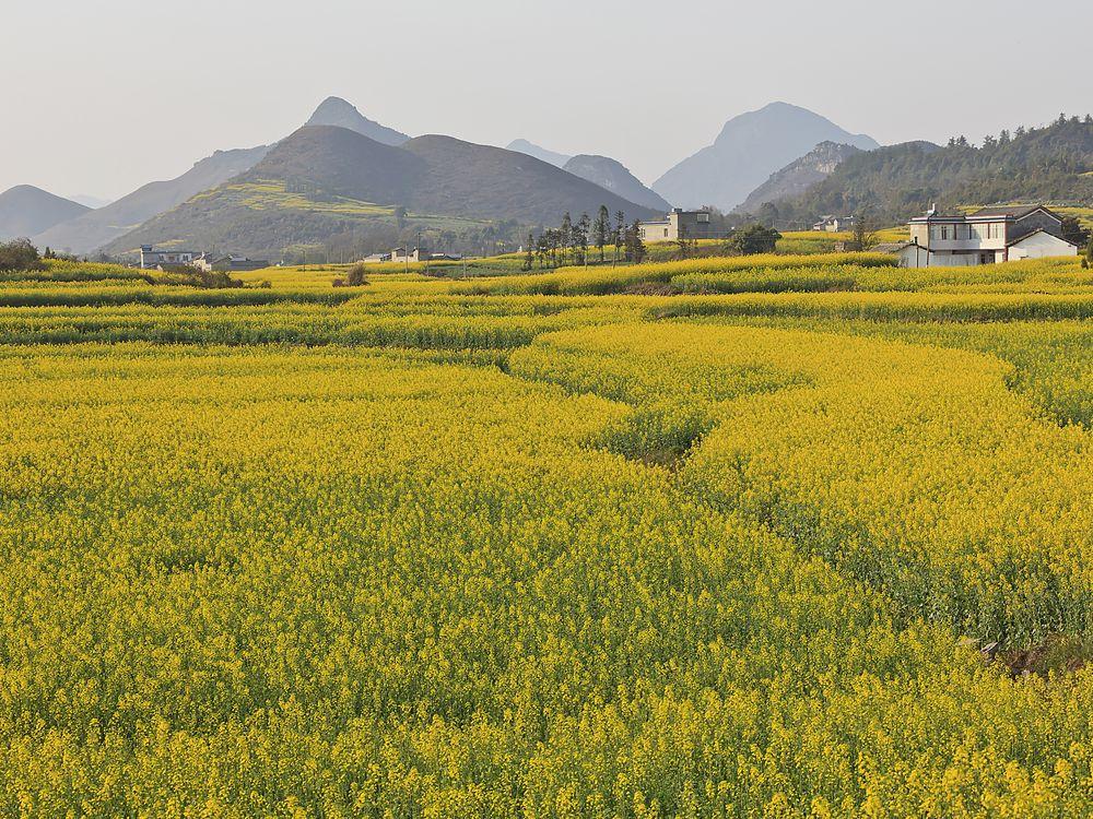 Flower Field China