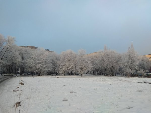 the turquoise sky and the trees in front of snow frosty storm thumbnail