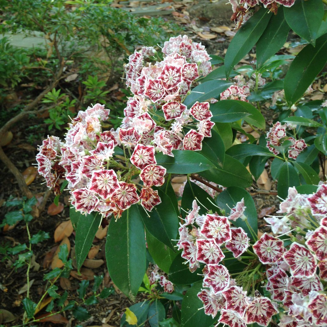 Ecologists Have this Simple Request to Homeowners—Plant Native