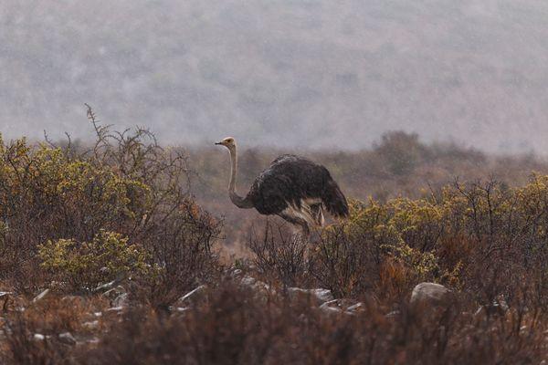 Strong rain in Karoo National Park. thumbnail