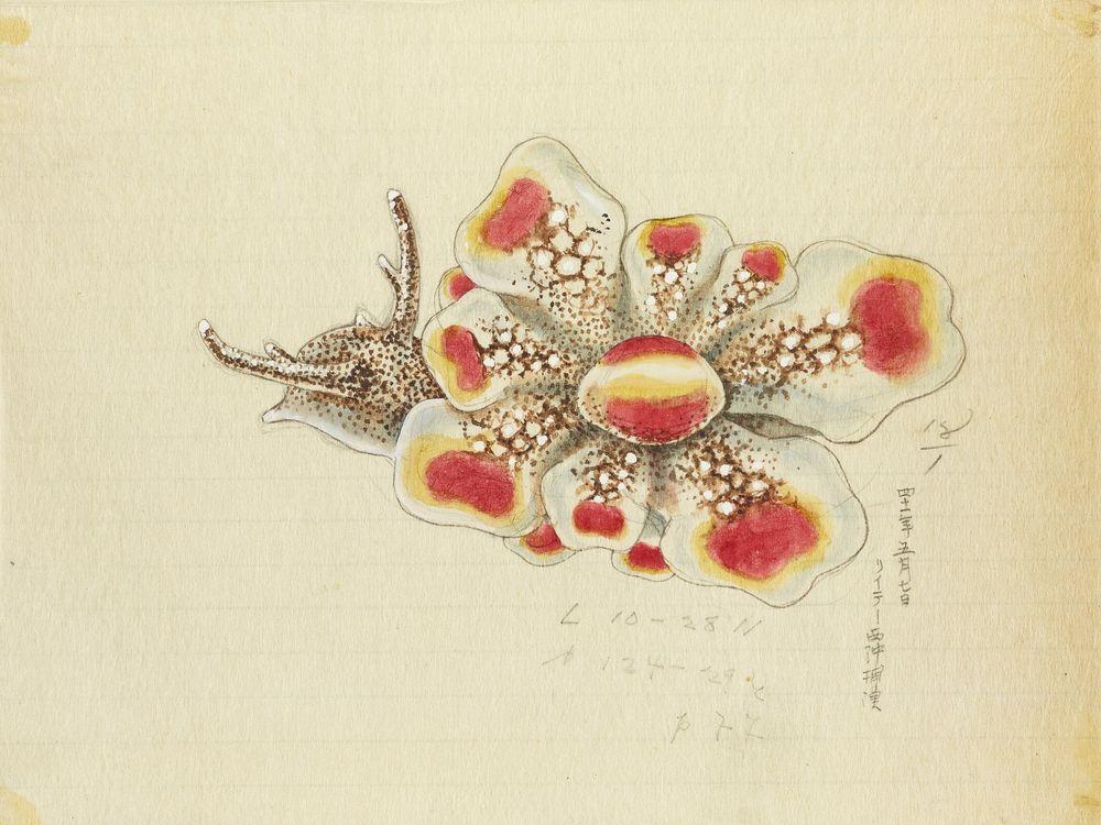 Watercolor slug illustration from